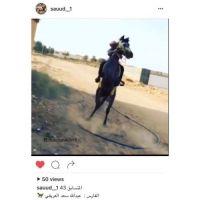 صوت ولا الفارس عبد الله